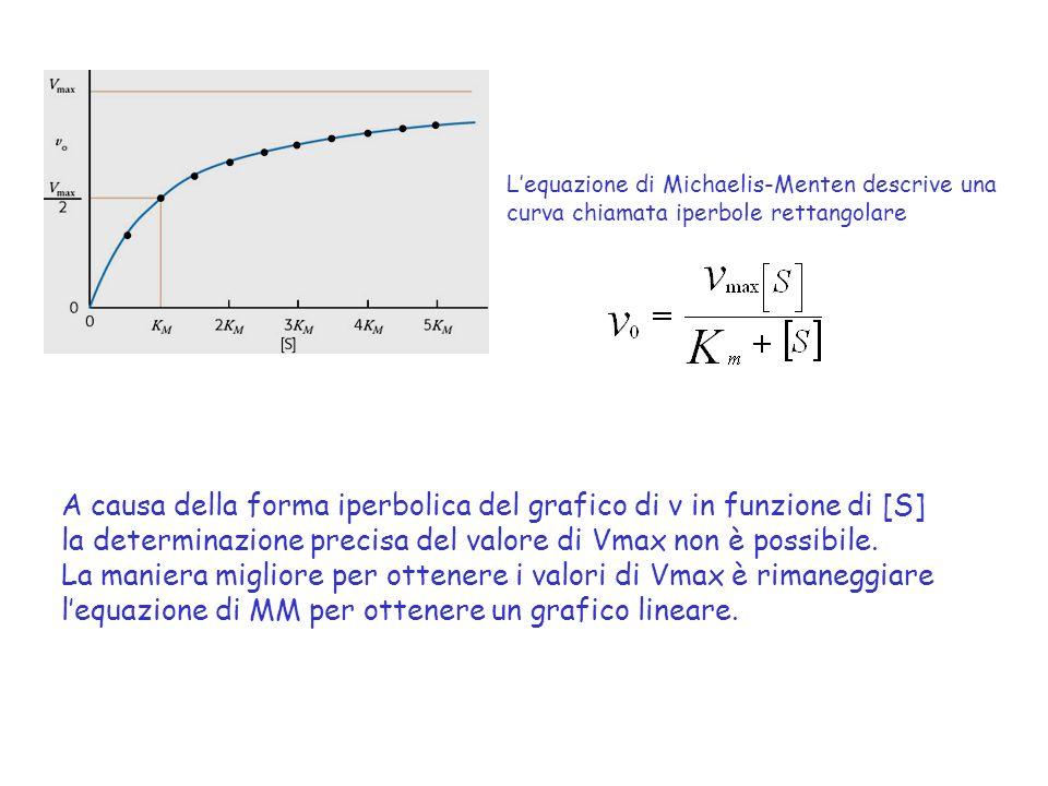 A causa della forma iperbolica del grafico di v in funzione di [S]